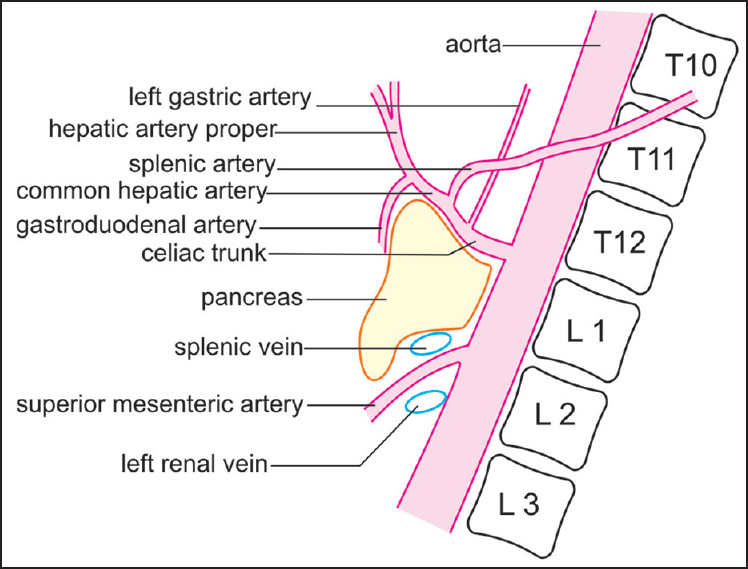 Techniques of imaging of the aorta and its first order branches by ...
